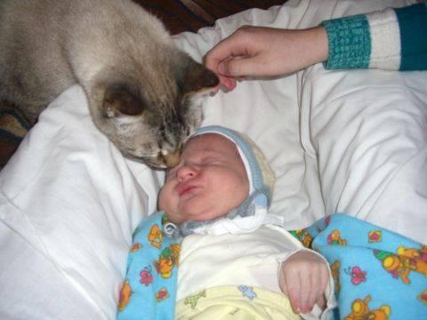 Стоит ли заводить кошку, если есть маленький ребенок в доме?