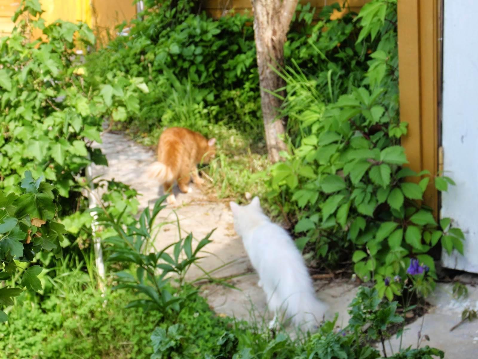 Лучше любого навигатора: как кошки находят дорогу домой