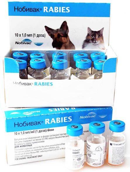"""Вакцина """"нобивак"""" для кошек – рабиес, трикет трио и другие: инструкция по применению"""
