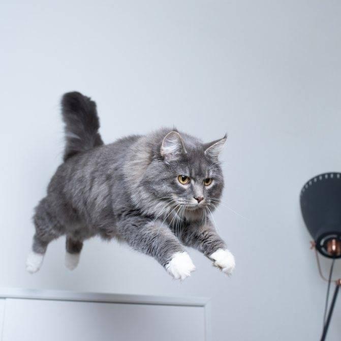 Как отучить котенка кусаться и царапаться: разбираемся в кошачьей психологии
