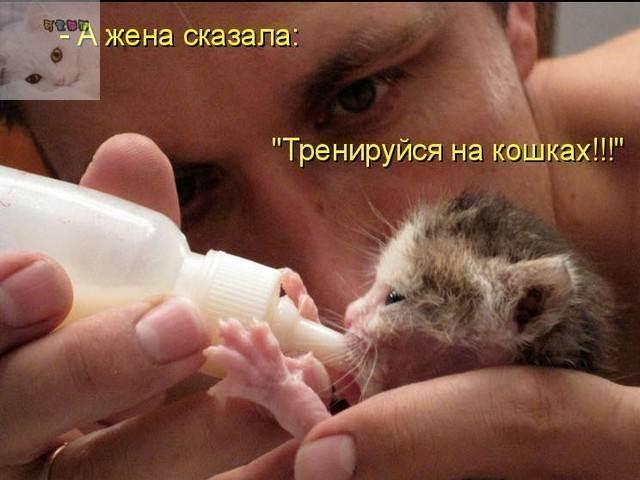 Как понять кошку: немного о кошачьем языке