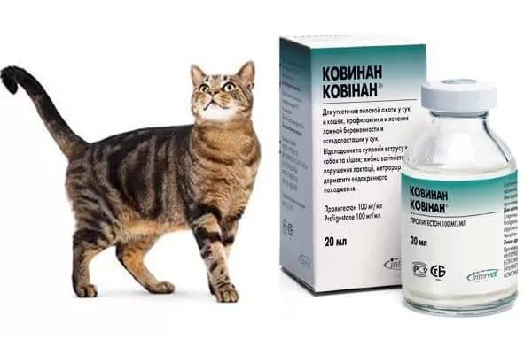 Котэрвин: инструкция по применению для кошек и котов, отзывы ветеринаров о каплях, аналоги