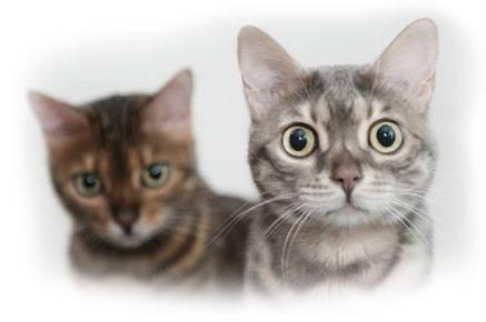 Что делать при первых родах у кошки: ответы и рекомендации