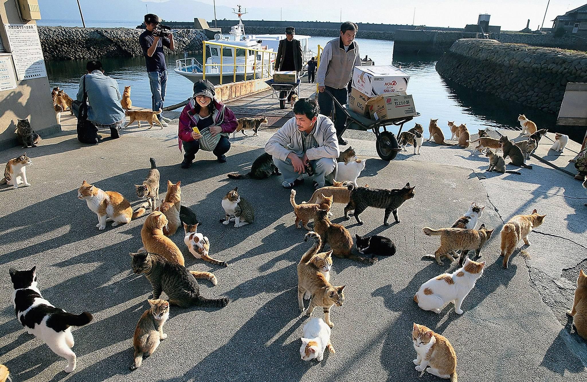 Сколько кошек насчитывается в россии и в мире, где на земле проживает больше всего котов?