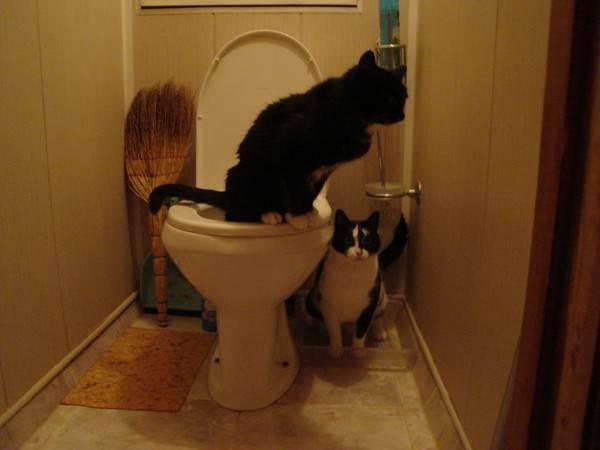 Кот писает раз в сутки – нормально ли это, сколько он должен ходить в туалет по-маленькому в норме?
