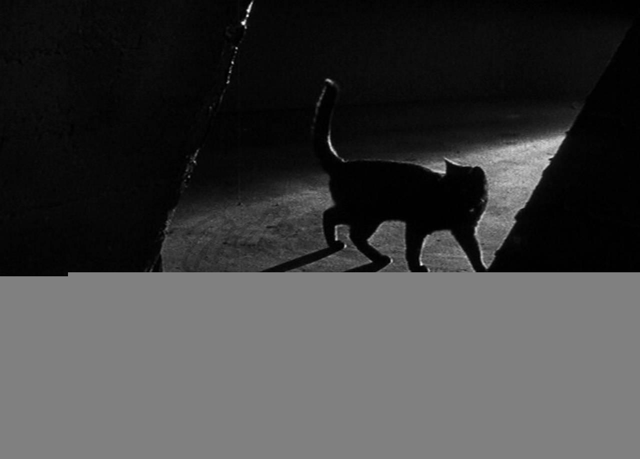 Почему кот орет по ночам? | рутвет - найдёт ответ!