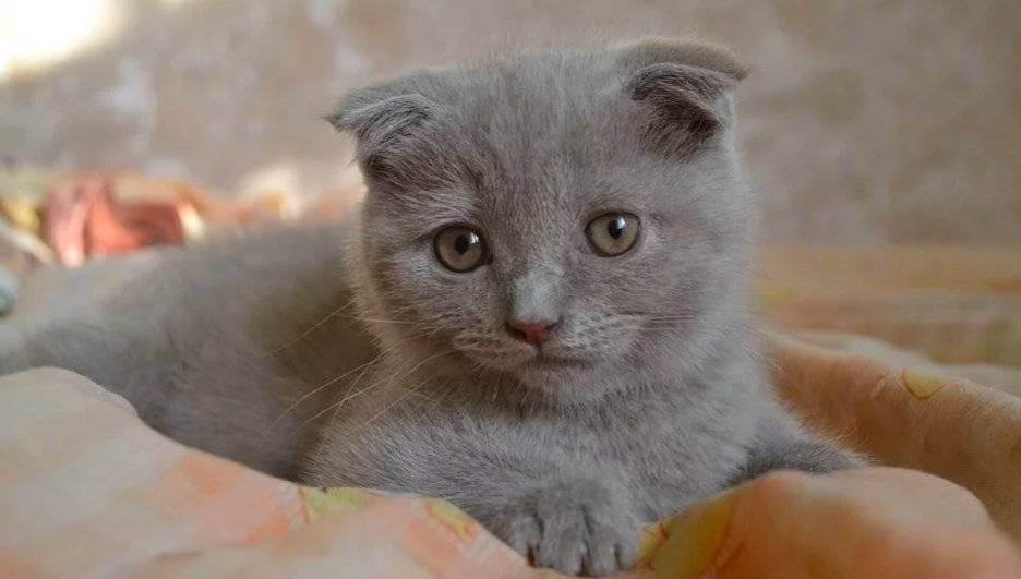 Фолд +фолд((( - запись пользователя ксю.наборы для шитья тильд. скидки!!! (ksushkin_daily_log) в сообществе домашние животные в категории болезни любимцев - babyblog.ru