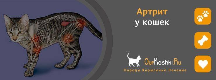 Артрит у котов лечение - муркин дом