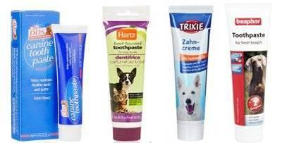 Как чистить зубы коту - в домашних условиях, чем чистить, пошаговая инструкция, выбор пасты и щетки
