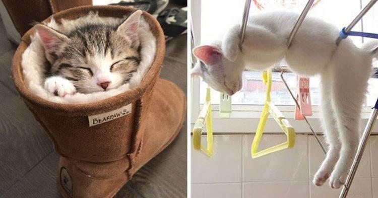 5 причин, почему котенок вялый постоянно спит