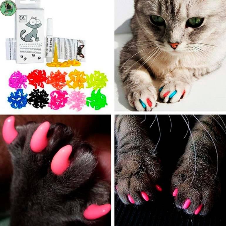 Что такое антицарапки, как их правильно надеть и снять с когтей кошки, каковы достоинства и недостатки накладок?