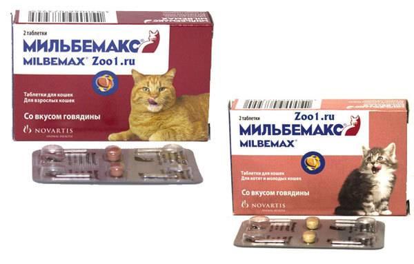 Способ применения таблеток от глистов мильбемакс для кошки