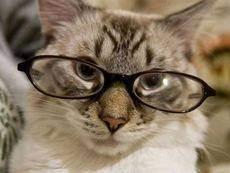 Почему некоторые кошки едят только один вид пищи?