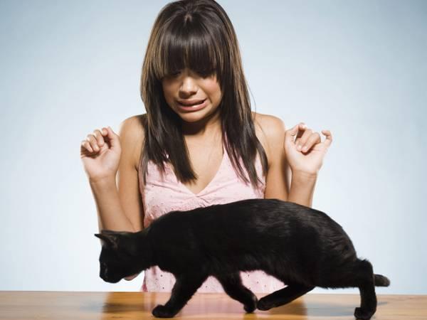 Кошка прячется в темные места: что делать, причины