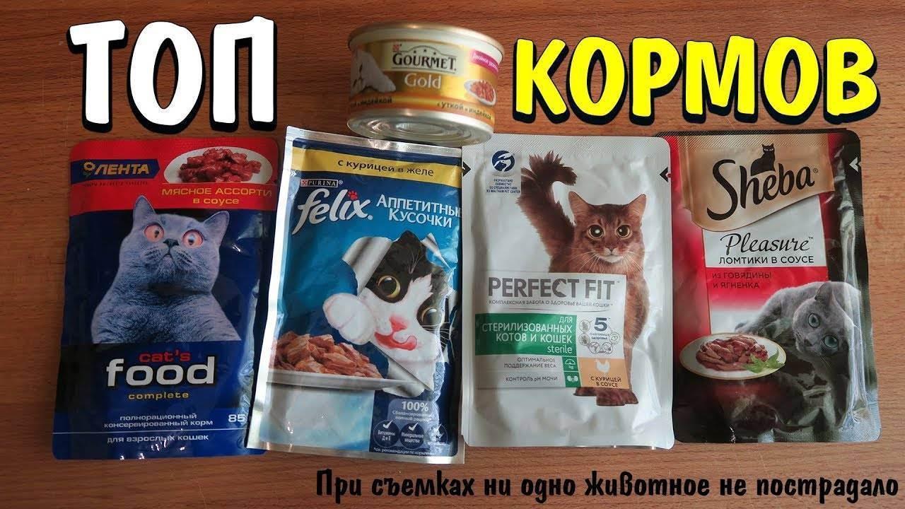Минусы и плюсы сухого корма для кошек: памятка для хозяина
