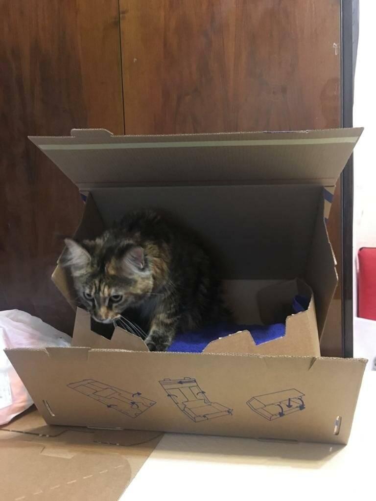 Почему кошки любят коробки: предположения + научные факты