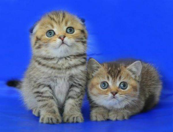 Дрессировка кота: так бывает?