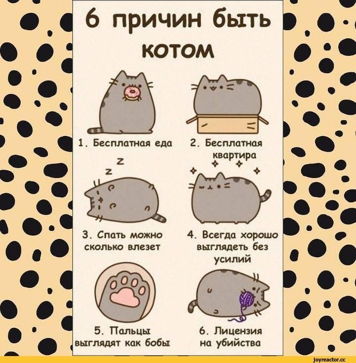 Что делать, если кот не хочет кошку?