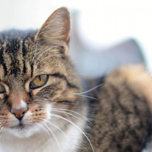 Здоровье вашей кошки в весенний период
