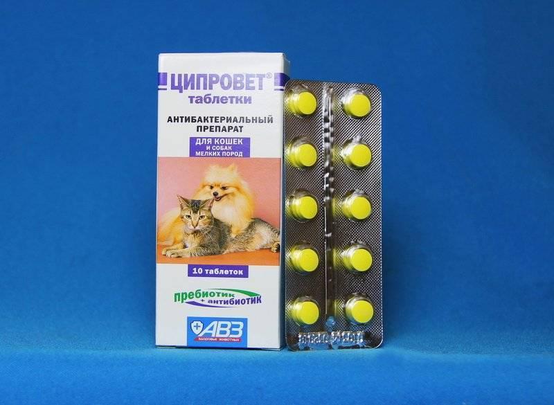 Офлоксацин для кошек, собак, животных   инструкция по применению офлоксацина в ветеринарии