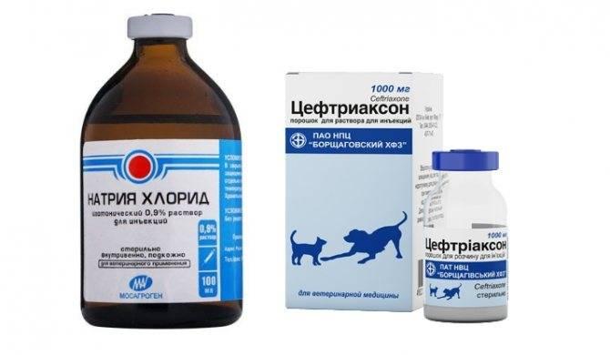 Антибиотик цефтриаксон: передозировка, ее признак и способы облегчения состояния