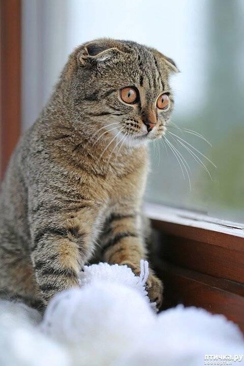 Кошку тошнит шерстью что делать