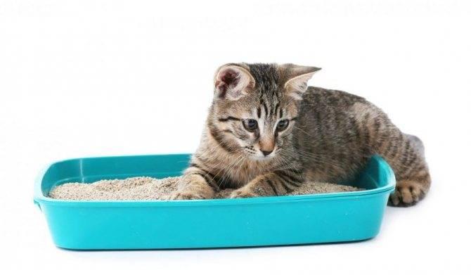 Почему кошка гадит на постель и как отучить ее это делать, видео