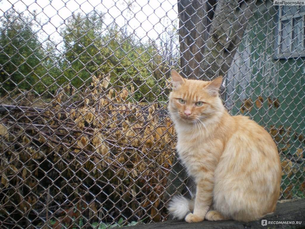 Советы при покупке котенка - запись пользователя ludmila (id970471) в сообществе домашние животные в категории кошки. болезни, прививки, советы по уходу - babyblog.ru