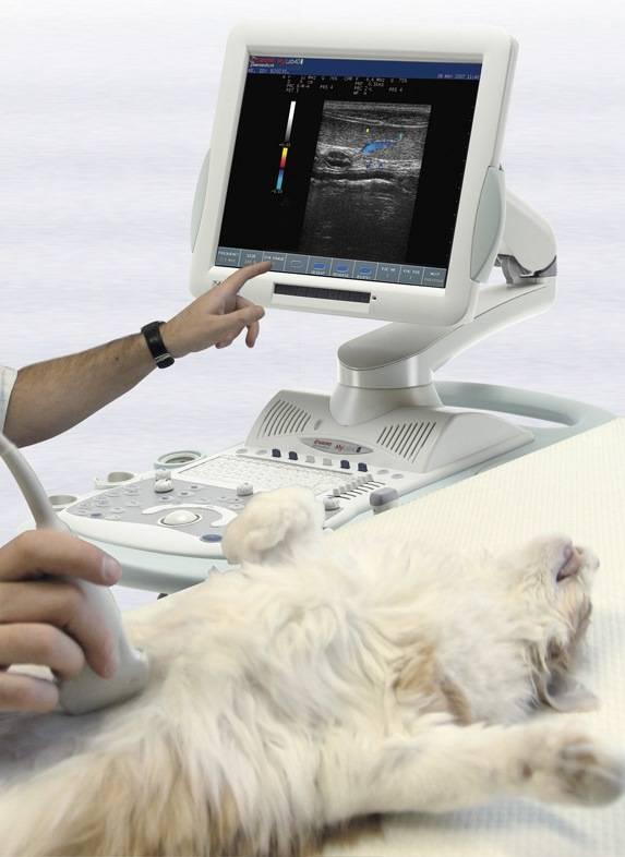 Узи-диагностика животных. интервью с врачом-диагностом