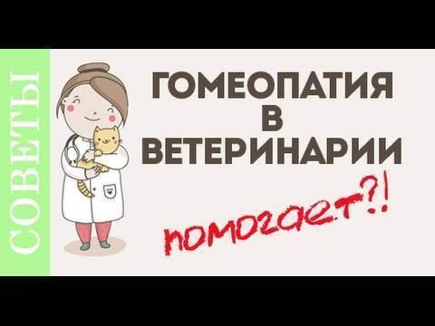 Гомеопатические препараты для собак и других животных.