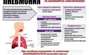 Пневмония у котенка: виды и методы лечения