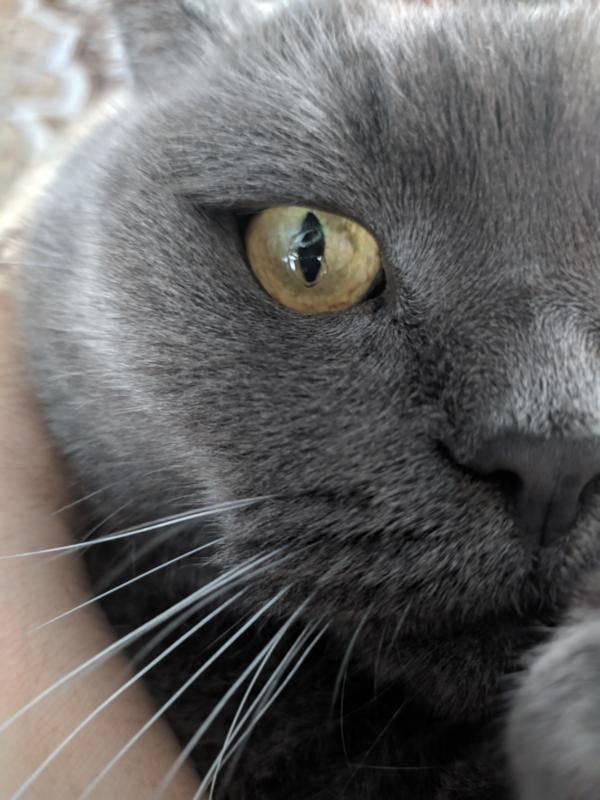 У кошки болят глаза затягивает пленкой. что это, когда у кошки глаза наполовину закрыты пленкой у котенка как будто пеленой затянут глаз - меднаука