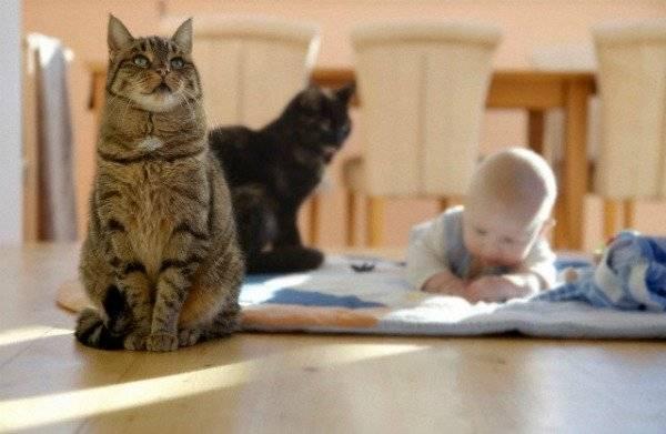 Топ 8 самых ласковых и добрых пород кошек - названия, описание и фото — природа мира