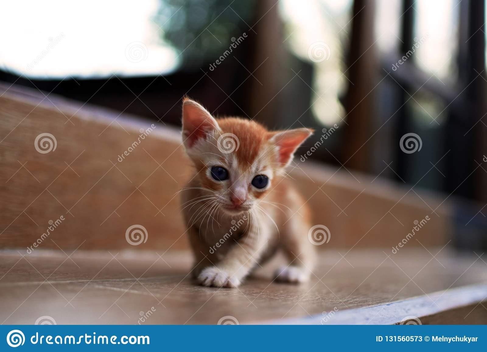 Кошка и новорожденный в доме - кот и новорожденный ребенок - стр. 1 - запись пользователя антошка (id1600323) в сообществе домашние животные в категории дети и животные - babyblog.ru