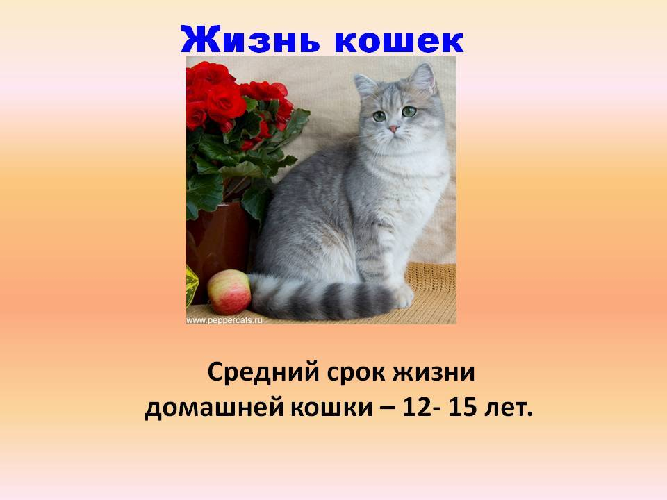 Продолжительность жизни кошек и котов