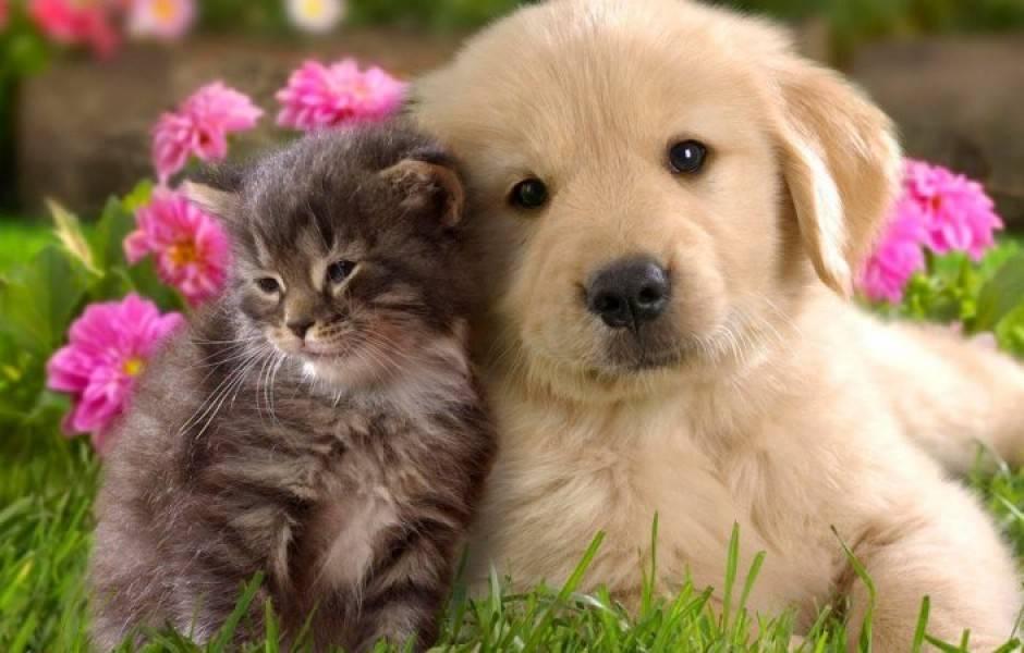 Красивые клички (имена) для кошек девочек