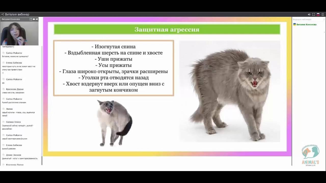 Причина агрессии кота по отношению к хозяину: почему таким стал и что делать