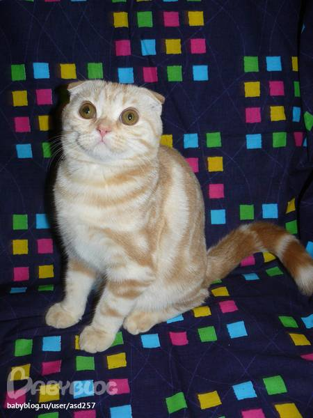 В ожидании котят – сколько ходят беременные кошки, ранние признаки беременности, помощь при родах