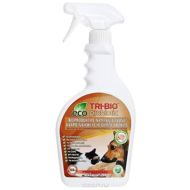 Как избавиться от запаха кошачьей мочи - эффективные методы