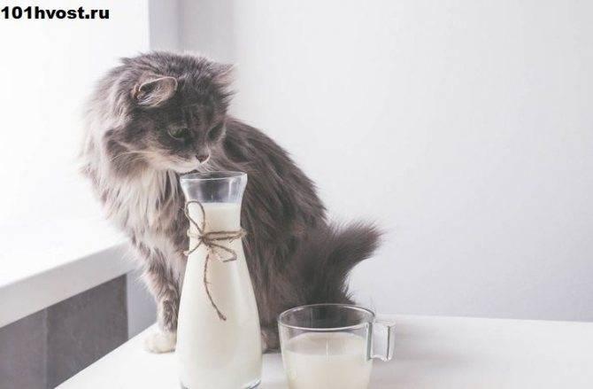 Можно ли давать кефир котятам, не вреден ли он котенку
