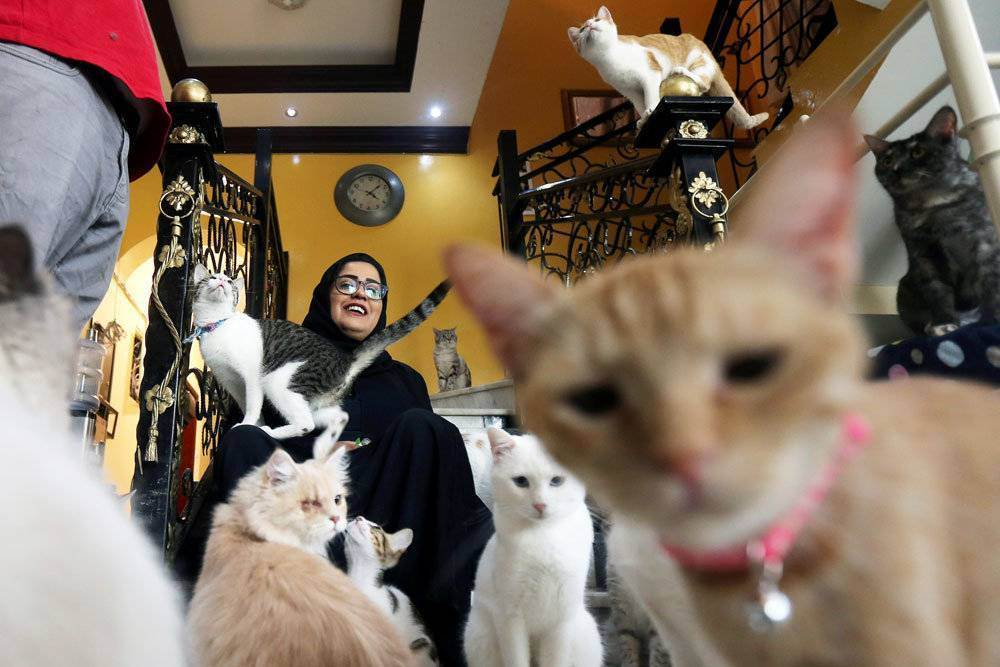 Почему кошку первую впускают на новоселье. совет как правильно запустить кошку