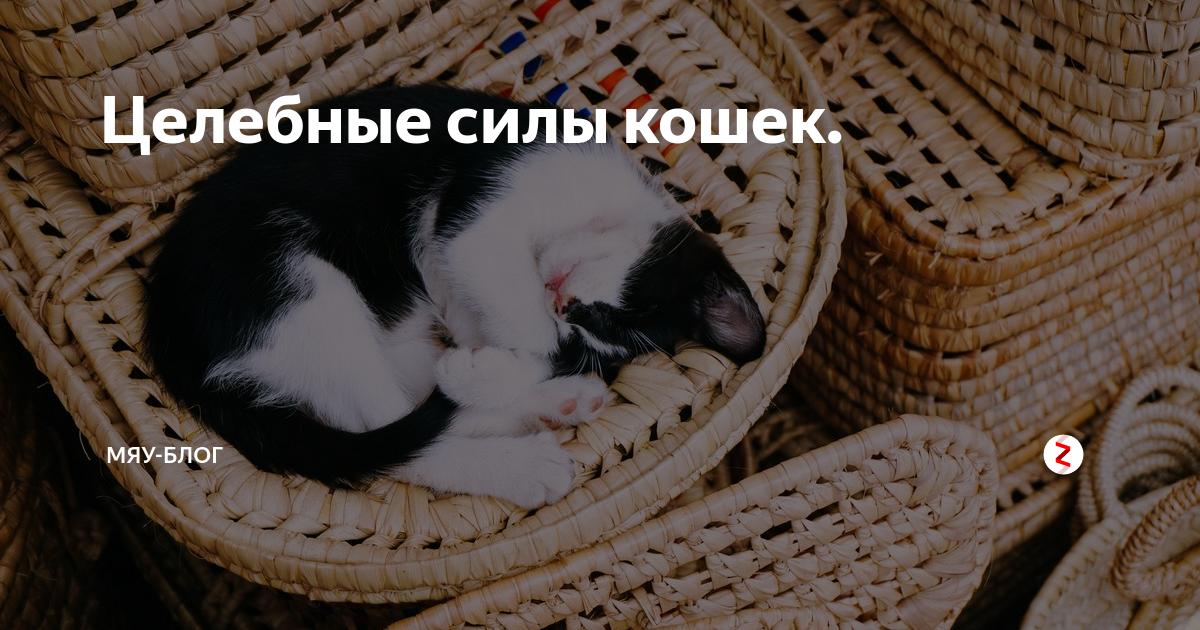 Окрасы кошек   beautyinfo
