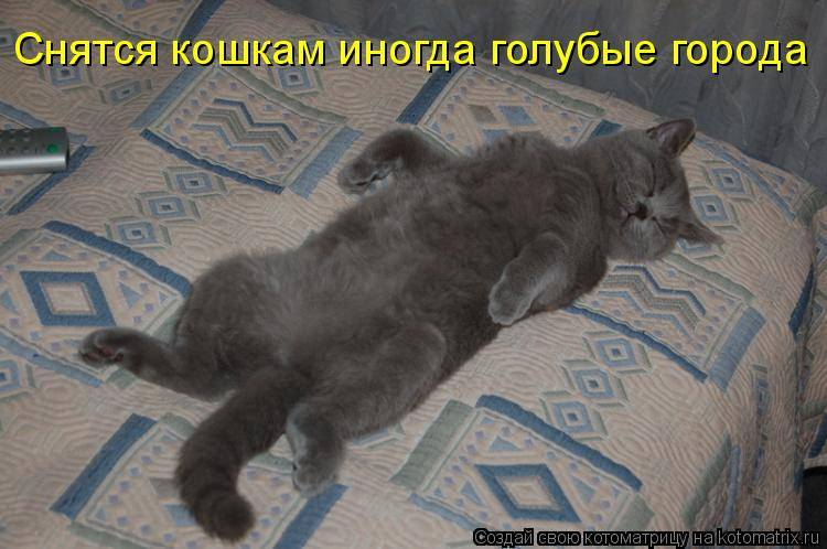 Часто снятся кошки