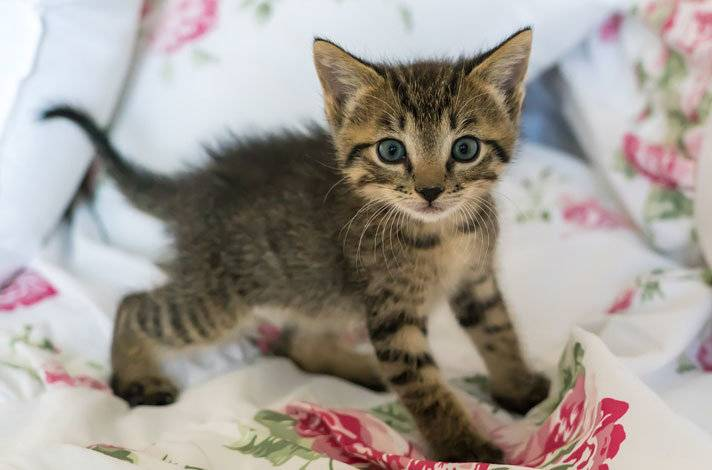 Стерилизация кошки – подготовка, основные этапы и уход за животным после операции