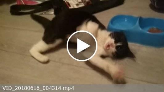 Эпилепсия у кошек: лечение, как прекратить приступы, препараты