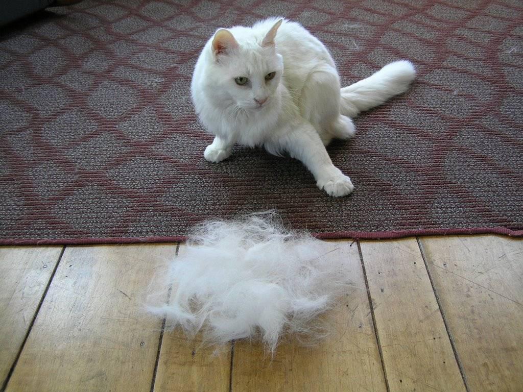 9 причин, почему британская кошка сильно линяет