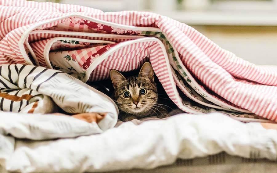 Почему кошка лезет под одеяло: все очень просто и понятно