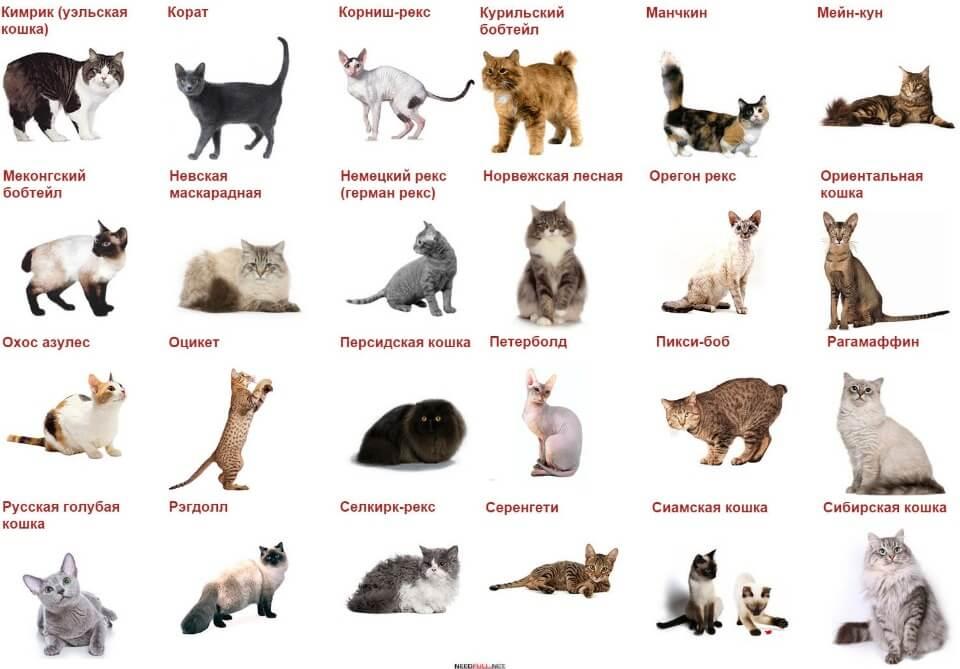 Чем кормить котенка: полное руководство