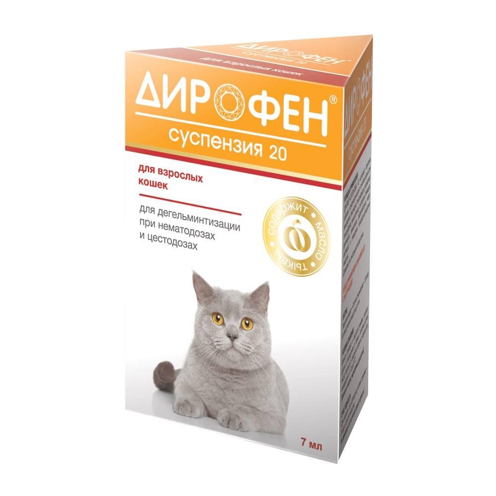 Что делать если у беременной кошки глисты - zhivomag