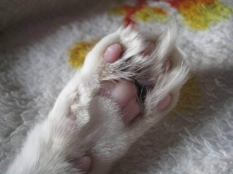 7 причин почему у кота отказывают задние лапы - как лечить